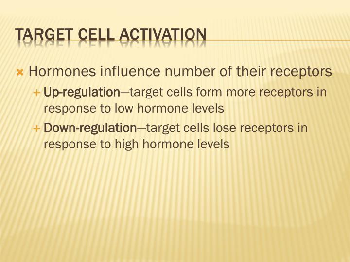 Hormones influence number of their receptors