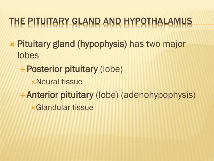 Pituitary gland (hypophysis)