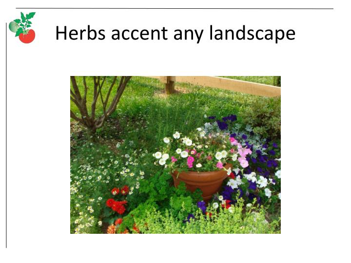 Herbs accent any landscape