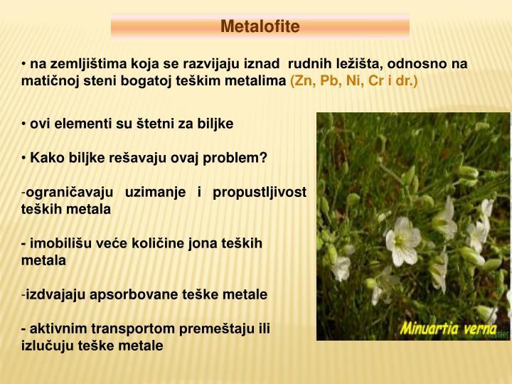 Metalofite