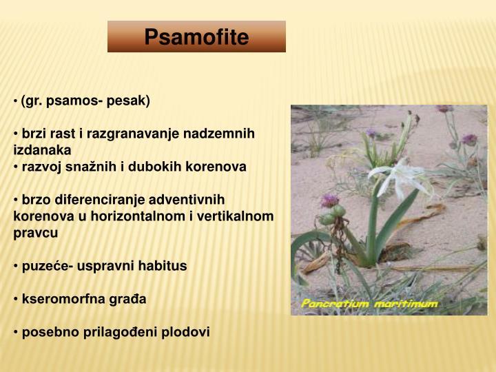 Psamofite