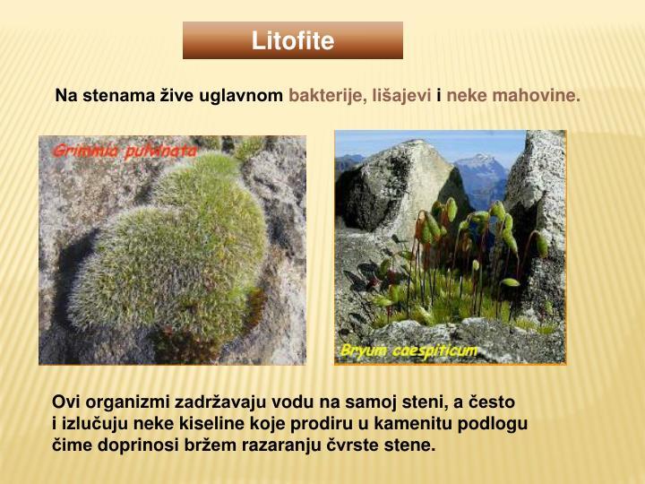 Litofite