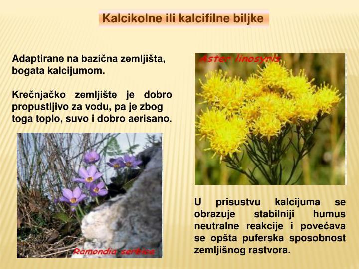 Kalcikolne ili kalcifilne biljke