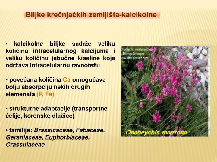 Biljke krečnjačkih zemljišta-kalcikolne