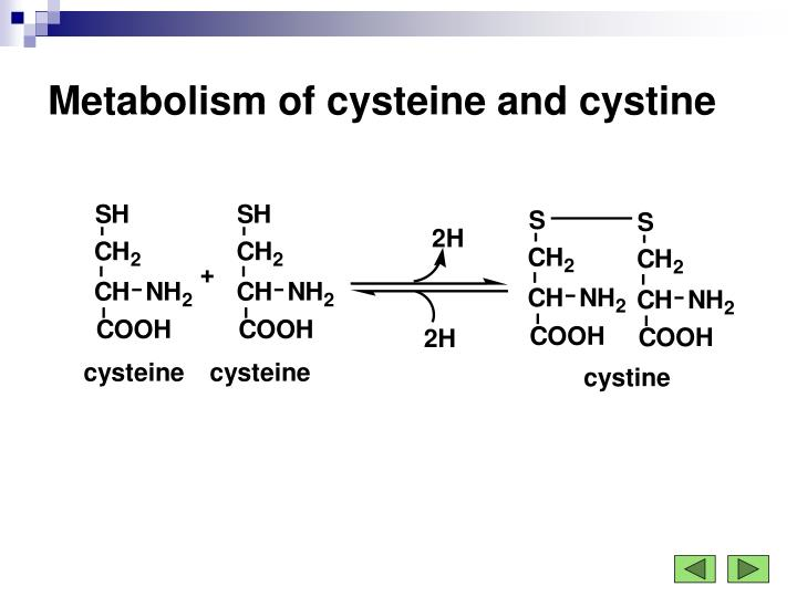 Metabolism of cysteine and cystine