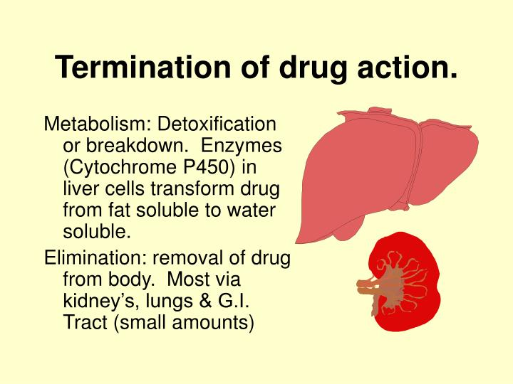 Termination of drug action.