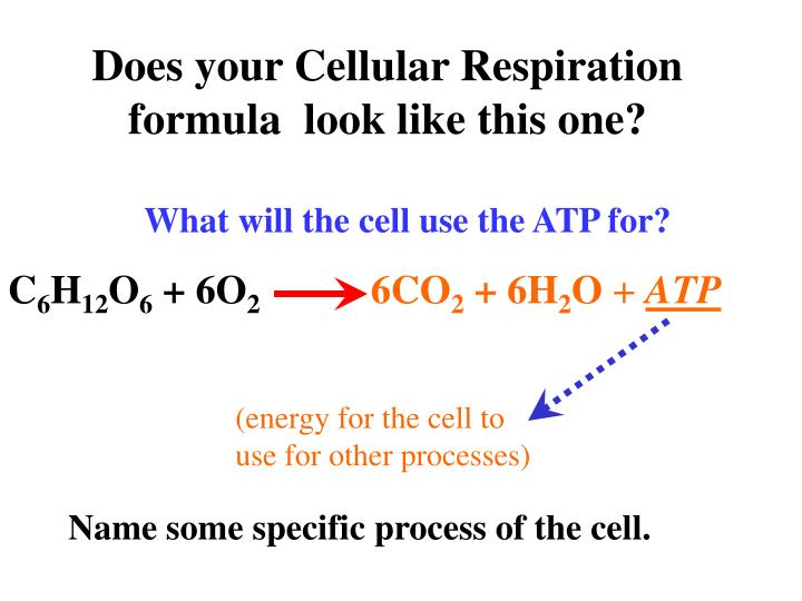 Does your Cellular Respiration