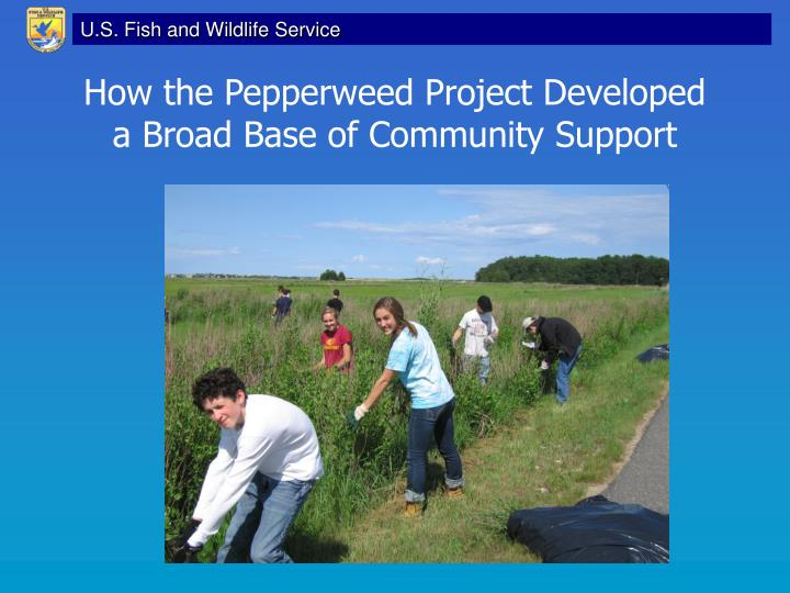 How the Pepperweed Project Developed