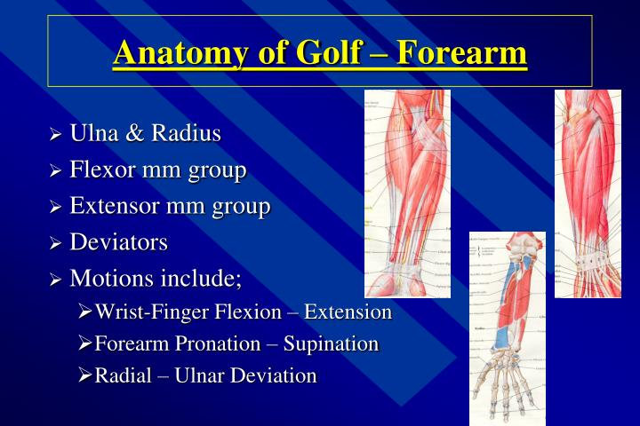 Anatomy of Golf – Forearm