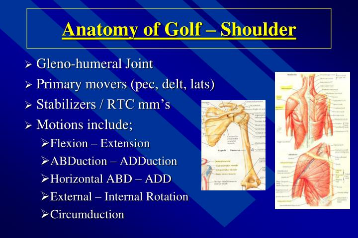 Anatomy of Golf – Shoulder