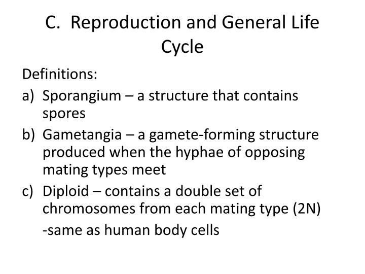 Makalah jamur deuteromycetes asexual reproduction