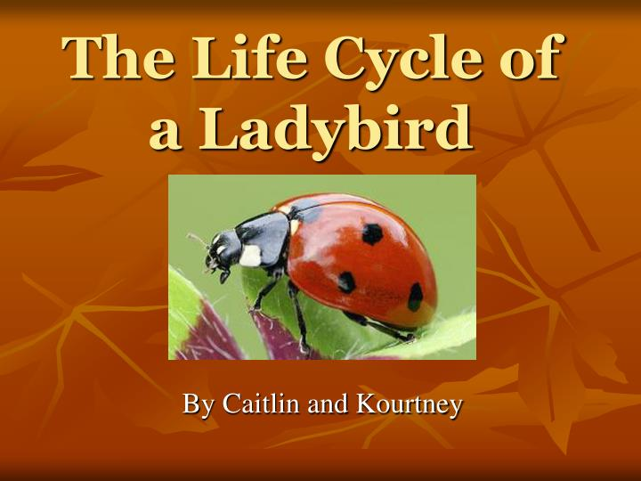 The life cycle of a ladybird