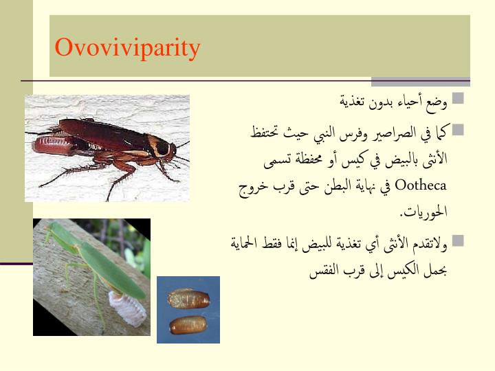 Ovoviviparity