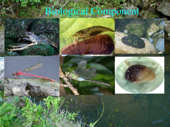 Biological Component