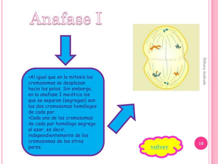 Anafase I