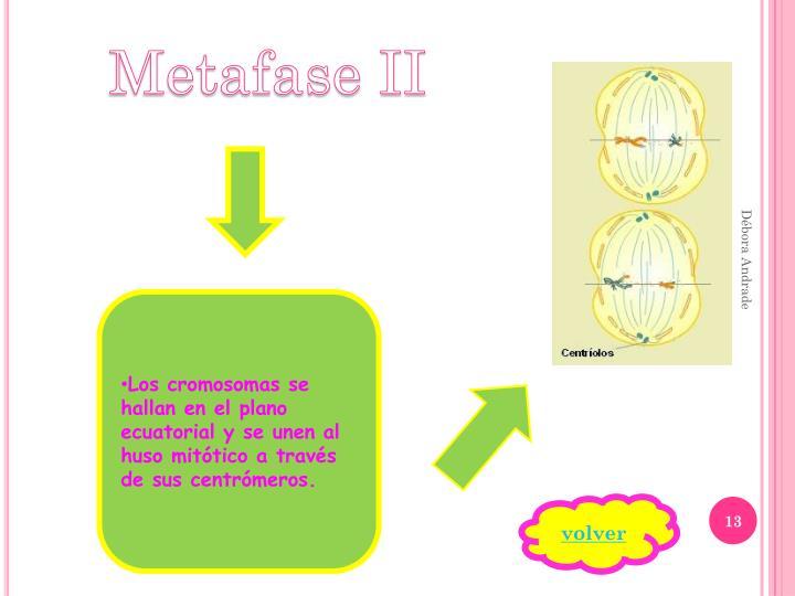 Metafase II