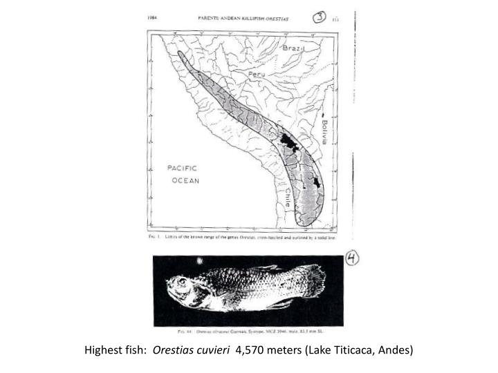 Highest fish: