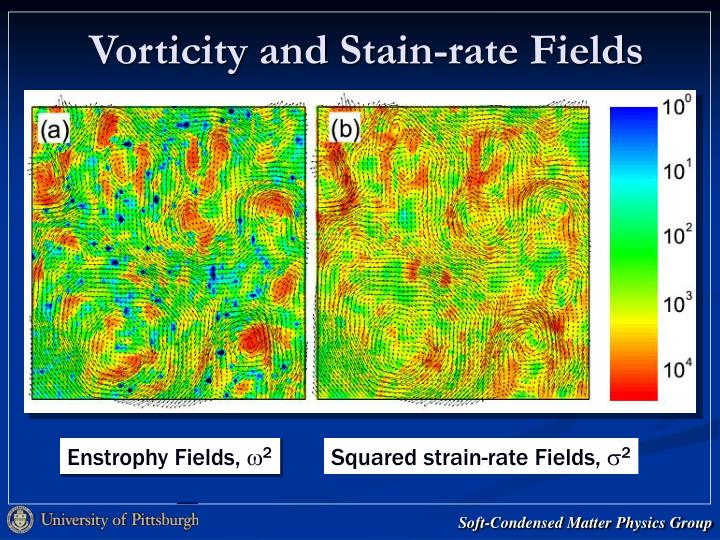 Vorticity and Stain-rate Fields