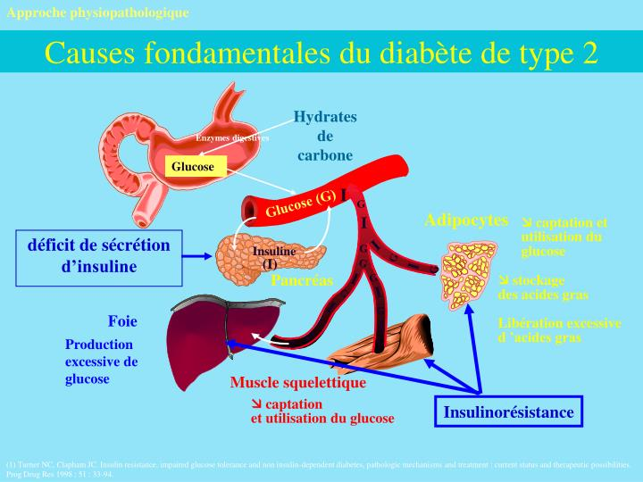 Approche physiopathologique