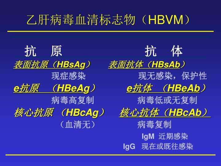 乙肝病毒血清标志物(