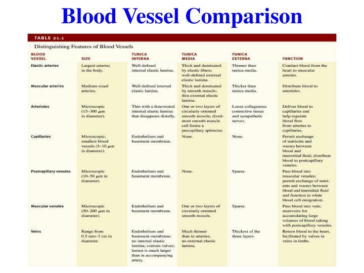 Blood Vessel Comparison