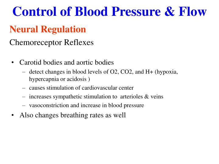 Control of Blood Pressure & Flow