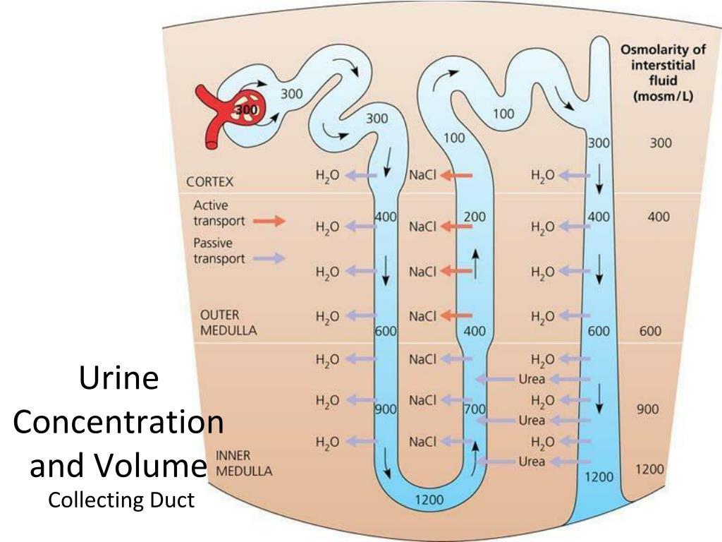 Gabapentin usos y efectos