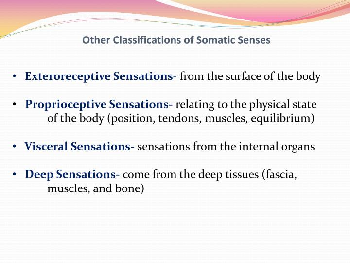 Other classifications of somatic senses