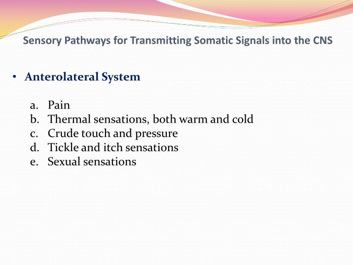 Sensory Pathways for Transmitting Somatic Signals into the CNS