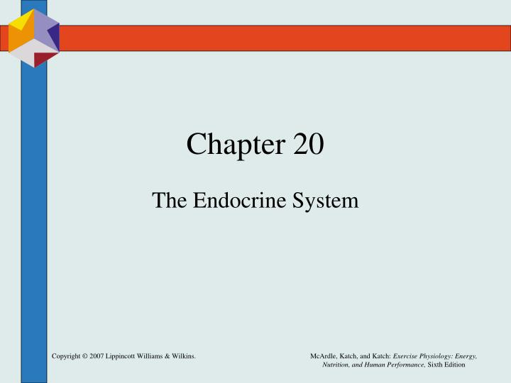 the role of the hormones in the endocrine system during exercise metabolism