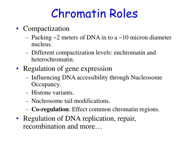 Chromatin roles