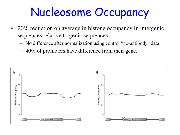 Nucleosome Occupancy