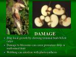 damage1