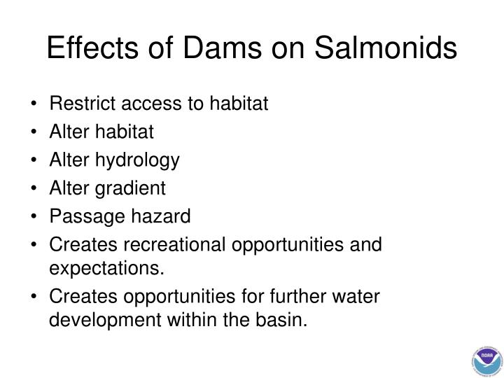 Effects of Dams on Salmonids