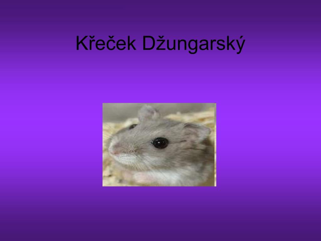 Ppt Krecek Dzungarsky Powerpoint Presentation Id 4172808