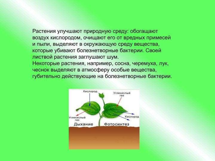 Растения улучшают природную среду: обогащают воздух кислородом, очищают его от вредных примесей и пыли, выделяют в окружающую среду вещества, которые убивают болезнетворные бактерии. Своей листвой растения заглушают шум.