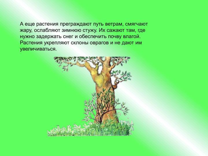 А еще растения преграждают путь ветрам, смягчают жару, ослабляют зимнюю стужу. Их сажают там, где нужно задержать снег и обеспечить почву влагой. Растения укрепляют склоны оврагов и не дают им увеличиваться.