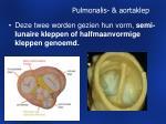 pulmonalis aortaklep