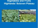 vegetables and fruits highlands boloven plateau