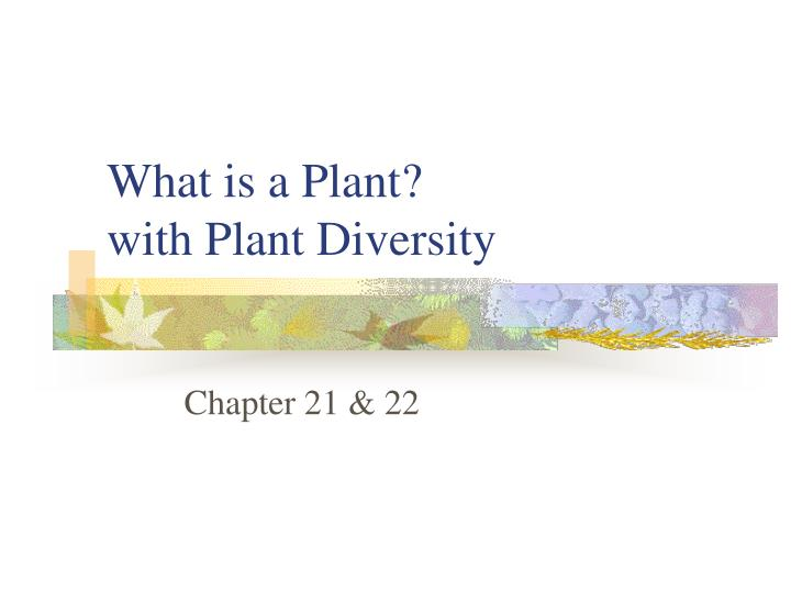 what is a plant with plant diversity n.
