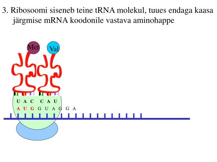 3. Ribosoomi siseneb teine tRNA molekul, tuues endaga kaasa järgmise mRNA koodonile vastava aminohappe