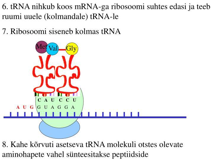 6. tRNA nihkub koos mRNA-ga ribosoomi suhtes edasi ja teeb ruumi uuele (kolmandale) tRNA-le