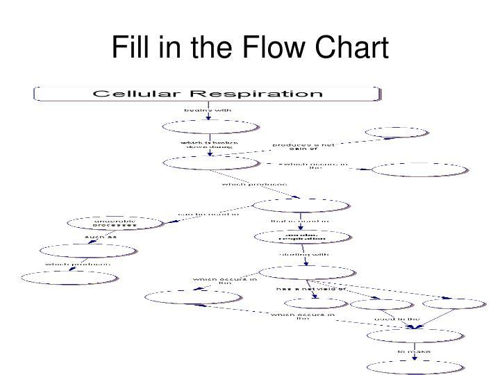 Ppt Cellular Respiration Powerpoint Presentation Id4180701