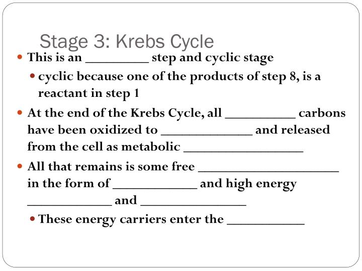 Stage 3: Krebs Cycle