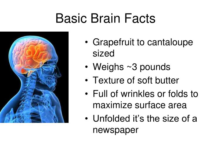 Basic Brain Facts