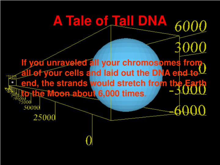 A tale of tall dna