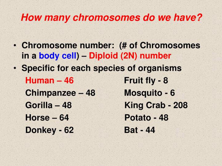 How many chromosomes do we have?