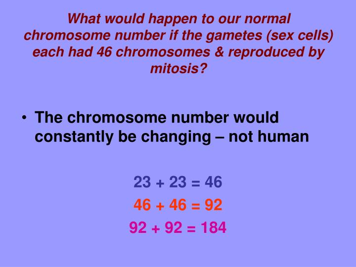 What would happen to our normal chromosome number if the gametes (sex cells) each had 46 chromosomes & reproduced by mitosis?