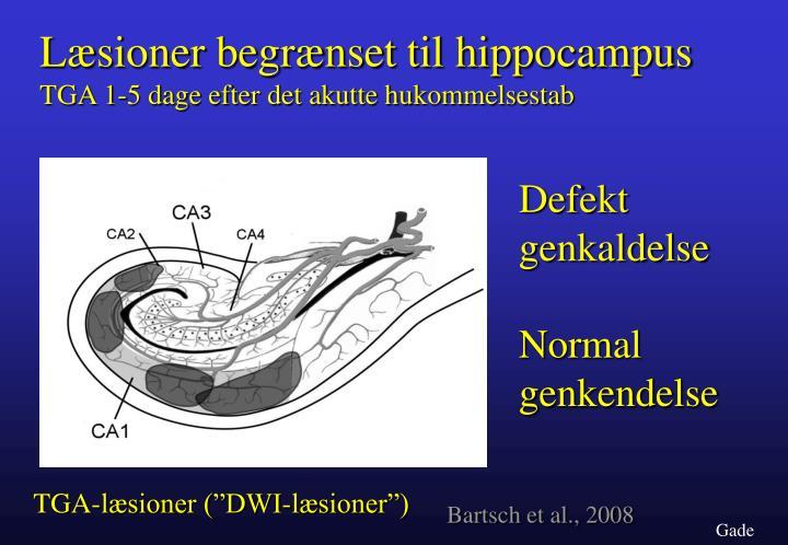 Læsioner begrænset til hippocampus