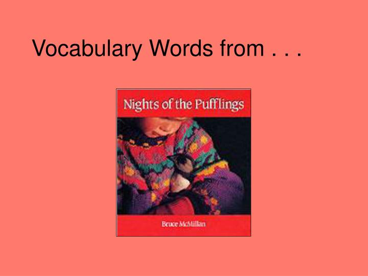 vocabulary words from n.